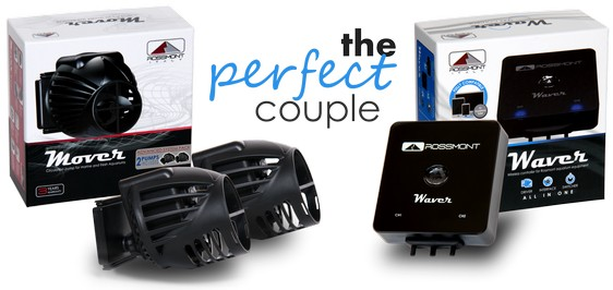 Rossmont Mover Waver   The Perfect Couple